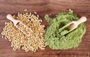 Semínka ječmene a prášek ze zeleného ječmene