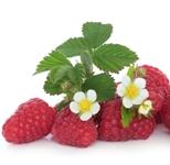ovoce maliny