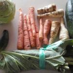 Zelenina rebarbora