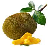 jackfruit breadfruit chlebovnik