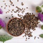 ostropestřec mariánský semínka i květy na stole