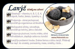 Info lanyz