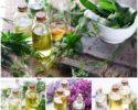 Sběr bylinek a léčivých rostlin podle měsíce