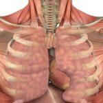 plíce dýchací cesty