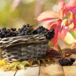 maqui bobule, antioxidant