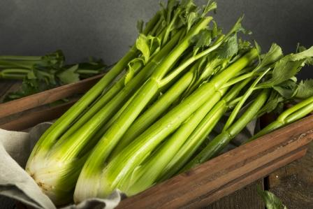stopkový celer