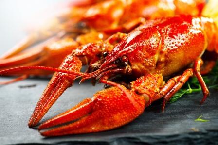 humr - lobstr uvařený na podložce