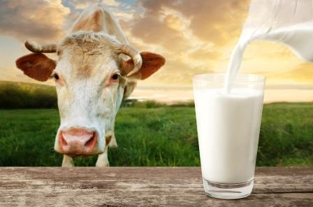 Krava na louce a pohár mléka, sušené mléko