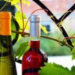 červené a bílé fľašky na víno mezi listama viniče