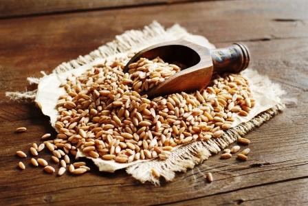 Celá zrna špaldy s dřěvenou lžící na stole