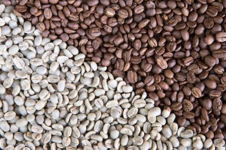 kávové zrna klasické a zelené kávy