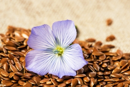lnené semínko a lnený květ