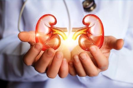 zdravé ledviny