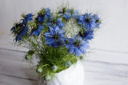 černucha modrý květ v hlinené váze