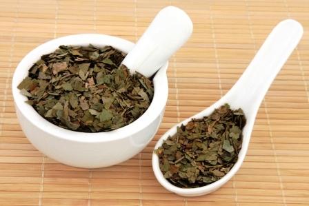 Ginkgo biloba bylina použitá v bylinne medicíne