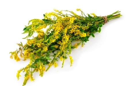 Lieciva rostlina komonica lekarska
