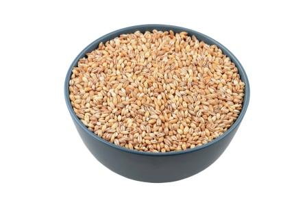 konopni seminka
