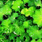 kontryhel zelene listy