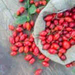plody sipovych ruzi