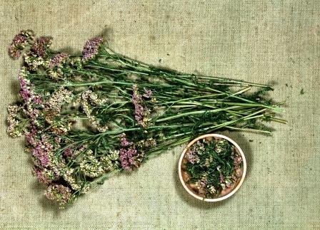 rebricek sucha bylinky