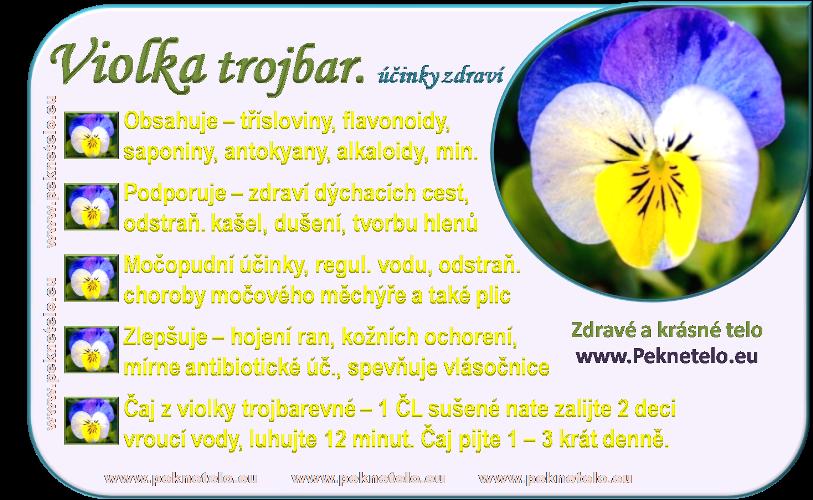 info obrazek violka trojbarevna