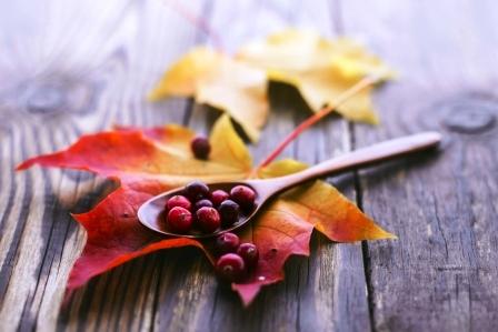 javorovy list a brusninky