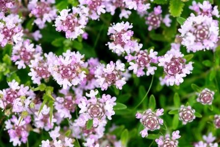 materi douska - kvety