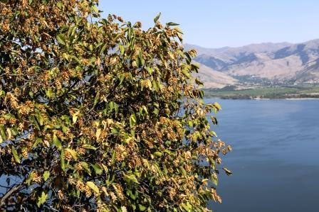 habr obecny pri jezere