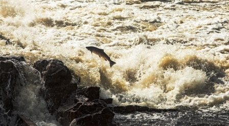 norsky kolagen ryby