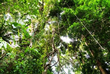 slnecne svetlo z tropickeho pralesa