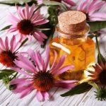 echinacea tinktura kvety